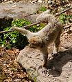 2016-04-21 14-52-55 montagne-des-singes.jpg