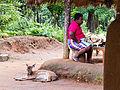 20160126 Sri Lanka 3930 crop Dambana sRGB (25674584151).jpg