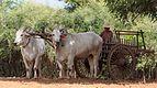 20160801 Myanmar Bagan 6721.jpg