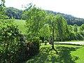 2018-05-13 (188) Nature at Bichlhäusl in Frankenfels, Austria.jpg