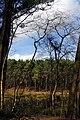 25.3.16 Delamere Forest 25 (25761717760).jpg