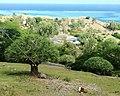 2 Rodrigues Screwpines -Pandanus heterocarpus - Rodrigues.jpg