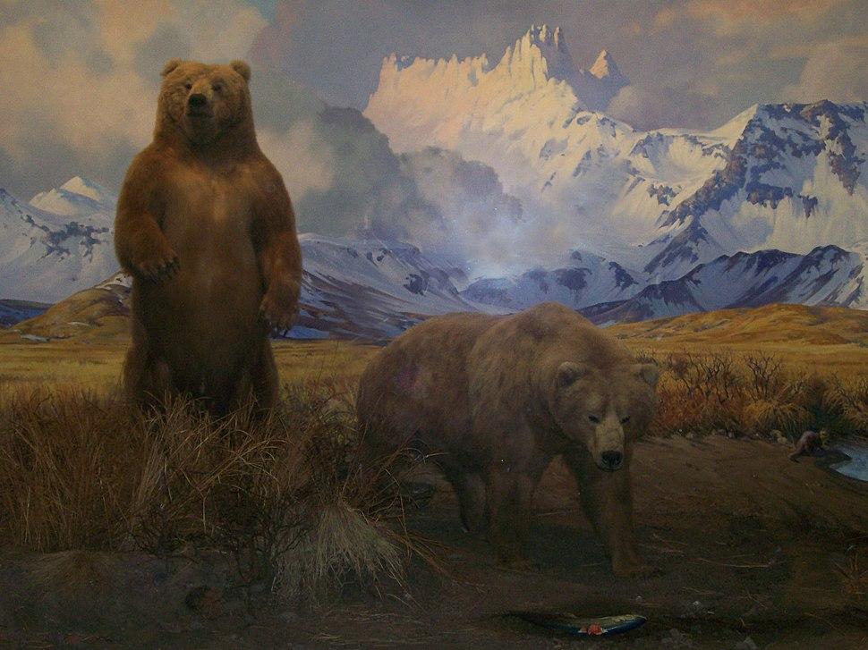 2~Bear~Diorama~AMNH~11-29-08