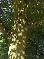 3-10-05 Eclipse on tree.jpg