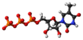 5-Methyluridine triphosphate anion 3D ball.png
