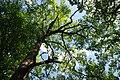 71-249-5023 Tiasmynske Oaks SAM 5445.jpg