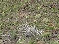ALMENDROS - panoramio.jpg