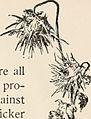 A Christmas carol (1900) (14593220498).jpg