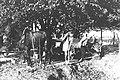 A FARMER AND HIS SON AT MOSHAV NAHALAL. חקלאים עובדים במושב נהלל בעמק יזרעאל.D29-068.jpg