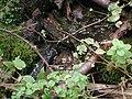 A Fekete Tisza születése... - panoramio.jpg