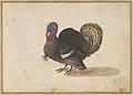 A Turkey MET DP800004.jpg