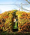 A colourful beech hedge arch - geograph.org.uk - 1582463.jpg