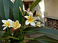 A flower1.jpg