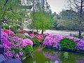 A garden in Soul.jpg