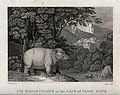 A hippopotamus standing by a river while others bathe. Engra Wellcome V0021564.jpg