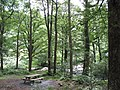 A picnic site on the banks of Afon Mawddach - geograph.org.uk - 489016.jpg