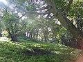 A swing, beneath the ash tree - geograph.org.uk - 2089923.jpg
