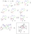 Absinthin Biosynthesis3.png