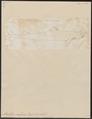 Acanthias vulgaris - 1700-1880 - Print - Iconographia Zoologica - Special Collections University of Amsterdam - UBA01 IZ14100145.tif