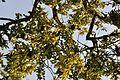 Acharya Jagadish Chandra Bose Indian Botanic Garden - Howrah 2011-01-08 9876.JPG