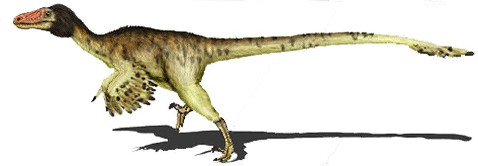Adasaurus mongoliensis2 copia