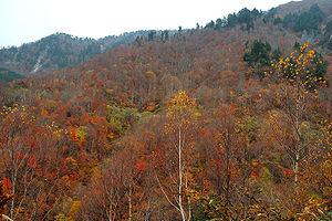 https://upload.wikimedia.org/wikipedia/commons/thumb/5/53/Akiyamago_2005_005.jpg/300px-Akiyamago_2005_005.jpg