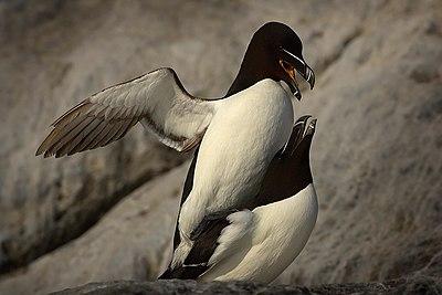 Μεγάλο μαύρο πουλί σκληρό σεξ