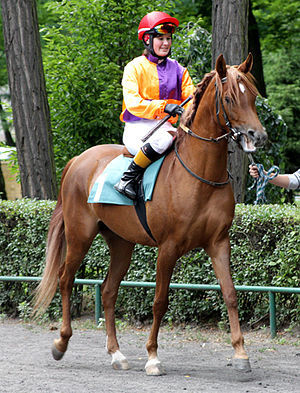 Filly - A three-year-old Arabian filly