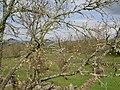Alfarela de Jales, 5450, Portugal - panoramio - Belarmino Ribeiro (2).jpg