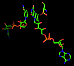 NADH peroxidase - Alignment of NADH, FAD and Cysteine 42 in NADH Peroxidase, Adapted from PDB 2NPX