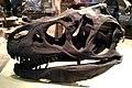 Allosaurus Skull (14725757490).jpg
