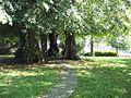 Alter Friedhof Glücksburg 2.jpg