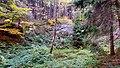 Alter Steinbruch am Kesselberg bei Rammenau.jpg