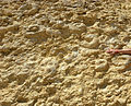 AmmoniteWallTamar052811.jpg