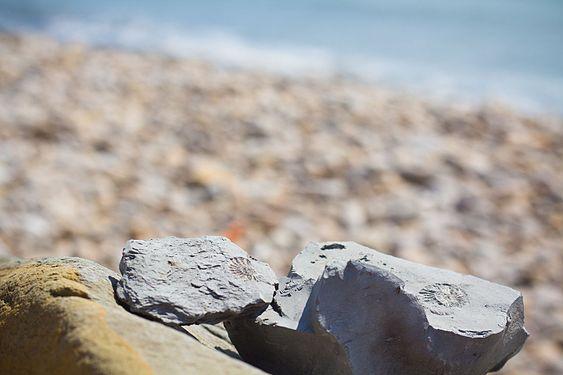 Ammonite at Jurassic Coast, Golden Cap, Dorset -9339.jpg