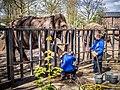 Amsterdam Zoo (8697323847).jpg