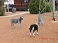 Animal Sculptures in Stonehenge - panoramio.jpg