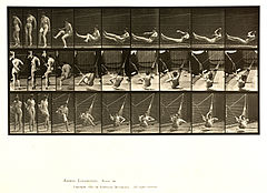 Animal locomotion. Plate 261 (Boston Public Library).jpg