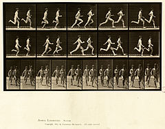 Animal locomotion. Plate 69 (Boston Public Library).jpg