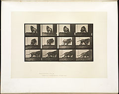 Animal locomotion. Plate 725 (Boston Public Library).jpg