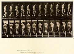 Animal locomotion. Plate 89 (Boston Public Library).jpg