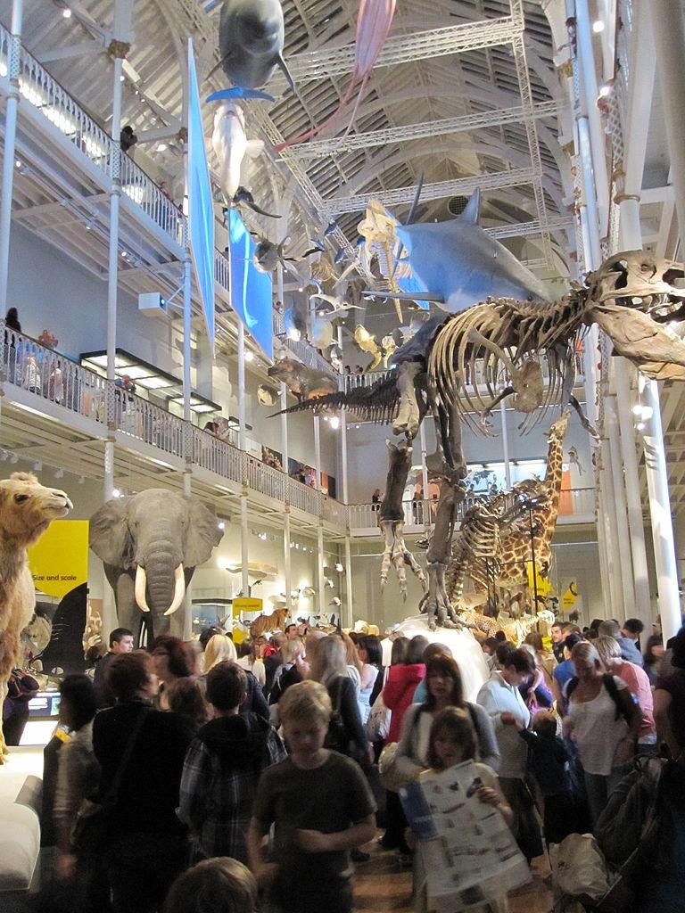 Squelette de dinausore au Musée National d'Ecosse - Photo de subberculture
