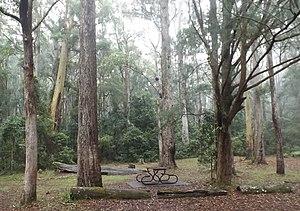 Springbrook, Queensland - Apple Tree Park, 2016