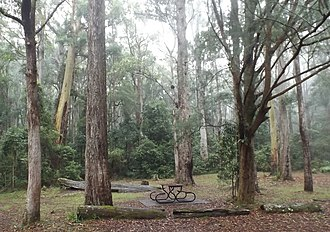 Springbrook, Queensland - Apple Tree Park, 2016
