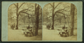 Apple vendor on Boston Common, from Robert N. Dennis collection of stereoscopic views.png
