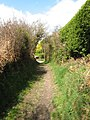 Approaching Honeysuckle Lane - geograph.org.uk - 1240551.jpg