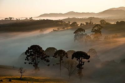 Araucárias ao fundo Parque Nacional da Serra da Bocaina - denoise.jpg