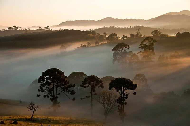 File:Araucárias ao fundo Parque Nacional da Serra da Bocaina - denoise.jpg
