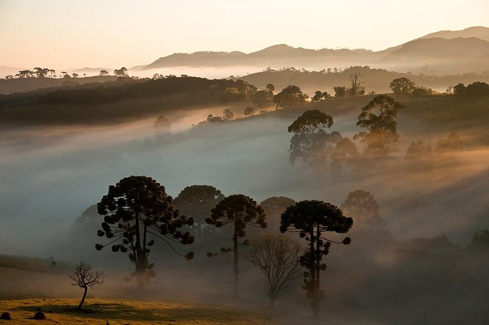 Araucárias ao fundo Parque Nacional da Serra da Bocaina - denoise