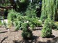 Arboretum Botanische Tuin TU Delft.jpg